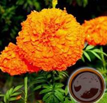 Marigold Oleoresin (Feed Grade)