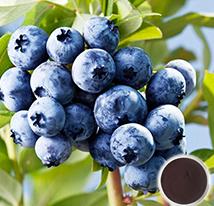 蓝莓花青素